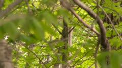Bird hiding behind leaves