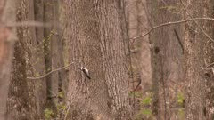 A small bird, possibly a Downy woodpecker, perched in a tree