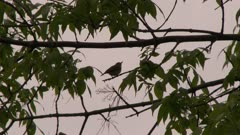 Small bird in the branches of a tree