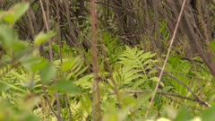 Ferns and grass growing in a deciduous forest