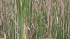Small bird perched on cattails near a river