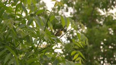 Small bird perches on the stems of tall white flowers flies up to a tree branch, possibly a Common Yellowthroat