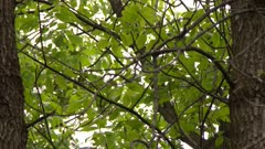 Close up on tree branches and leaves in a deciduous forest