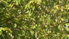 Small yellow bird perched in a tree, flying from branch to branch