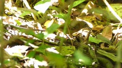 Small bird destroying insect prey in the jungle with sun under the leaves