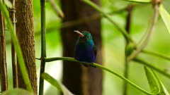 Exotic sight of humminbird standing on green plant in rainforest