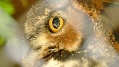 Extreme macro closeup of the eye of an owl with slight head turn