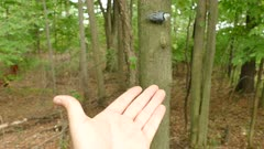 Bird flying and landing on cameraman's hand in the forest