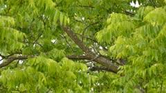 Woodpecker appears on branch between green blurry leaves