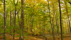 Beautiful lush Canadian forest in autumn with colorful trees on windy day