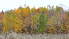 Green, yellow and orange colors displayed by various trees in autumn