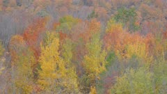 Late fall scenery of forest line with trees of various colors in the wind