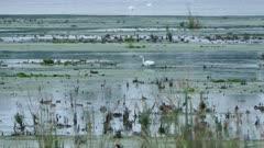 White egret standing in marshland with hundreds of other birds at dusk