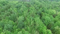 Drone flying forward and tilting upwards to reveal forest with humidity cloud above