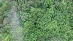 Vertical drone moving shot of humid North America mixed forest in the summer