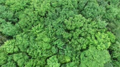 Vertical slow moving drone shot of deciduous broad-leaf Canadian forest