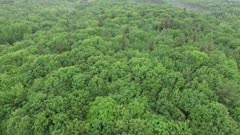 Drone flying down and forward only to tilt up and reveal large scale forest in Canada