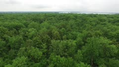 Stunning aerial drone shot of forest canopy with large bird of prey flying in frame