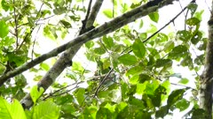 Underneath view of large green parrot in jungle
