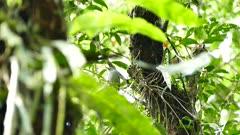 Panama jungle with sun piercing through and bird