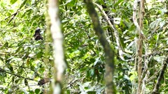 Busy and dense jungle with bird hiding in plain sight