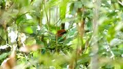 Tropical bird seen through beautiful dense rainforest