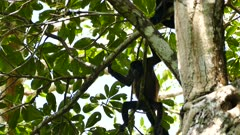 Multiple shots of monkeys resting atop a tree on sunny day