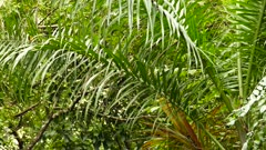 Large palm leaf with black bird hopping to the left end of it
