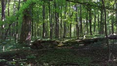One minute sequence of light and shadow on trees in broadleaf forest