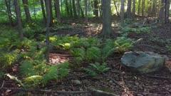 Nature scene of ferns growing under moderate sun light in Canada