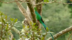 Long tail made of feathers moving in gentle wind from body of Quetzal