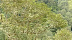 Elevated view of a tree with a Quetzal bird on a blurry mountain background