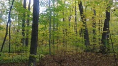 Dense and thick forest colored by the fall in yellow and green in Canada