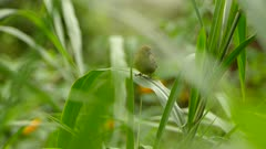 Yellow bird perched on bent leaf due to weight takes off and flies away