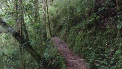 Slow forward moving steadicam shot of Costa Rican elevated terrain