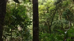 Wall of tropical high trees seen on sideway moving camera in Costa Rica