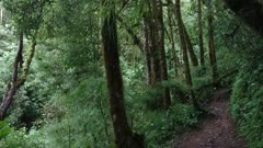 Hillside trail in deep jungle viewed on gimbal mounted camera in motion