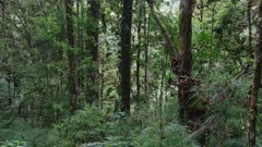 Dense jungle with many tree and plant varieties seen on moving gimbal