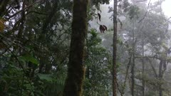 Beautiful cloud forest landscape of Costa Rica on slowly moving gimbal