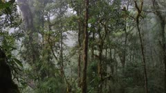 Stunning shot of Costa Rica cloud forest in the deep jungle with fog