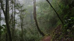 Impressive cloud forest of Central America viewed while walking on a trail