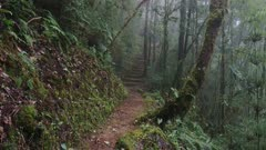 Beautiful trekking trails of Costa Rica on hill-side of the cloud forest