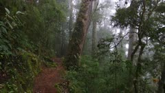 Incredible pure cloud forest of Central America viewed on gimbal camera