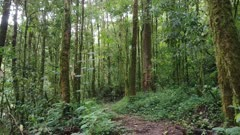 Tropical rainforest trail seen on glidecam while trekking and walking forward