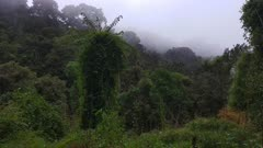 Beautiful deep valley in the Costa Rican cloud forests of highland mountains