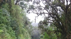 Walk under canopy of mossy tree on one side and jungle hill on the other