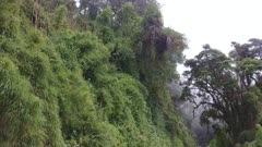 Dense elevated plants and trees grow on dramatic cliffside of Costa Rica