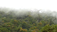 Low clouds moving fast over top of lush Costa Rican mountain forest