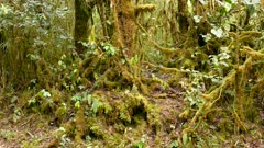Busy and dense cloud forest plants and trees thriving in Costa Rica