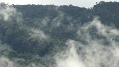 Quick moving fog in foreground of a high tropical mountain in Costa Rica